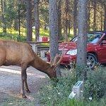 Wapiti Campground Foto