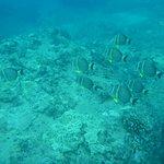 Foto de Sharks Cove Rentals
