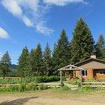 Main cabin and garden