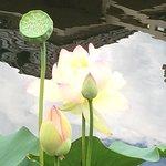 Beautiful Water Lilies!