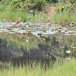 Yokdon National Park Foto