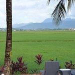 Ausblick über die grünen Reisfelder