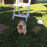 Yappy Hour Event