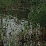 RSPB Reserves - Suffolk