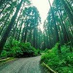 Glacier Gardens Rainforest Adventure Foto