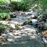 The brook behind Nordick's