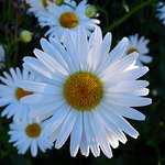 Flores de la zona