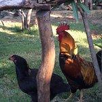 Çiftlikteki hayvanlardan bazıları