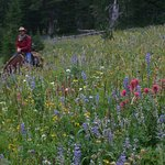 Horseback riding through mountain wildflowers