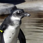 You don't want to miss the penguin exhibit.