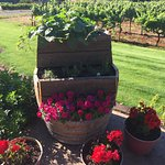 Foto de Wine Country Farm