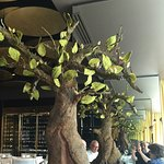 This is actually a chocolate tree with chocolate fruit on it , and they serve it on your table