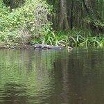 Canoe Escape Foto
