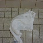 My son dropped his washcloth on the shower floor. This is how it looked the next morning.