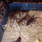 Photo de Skipjack's Seafood Grill, Bar & Fish Market