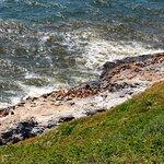 stellar sea lions sunning