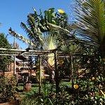 Lindas palmeiras