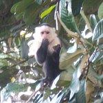 white-faced capuchin outside cabin 4