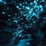 Waitomo Glowworm Caves Image