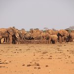 Elephants at the water hole - Tsavo East