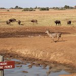 Water hole at Ashnil Aruba lodge - Tsavo East