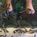 Foto di Foot Master Fish Spa