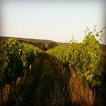 Korenika & Moskon Winery