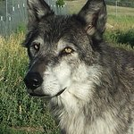 Gambar Howlers Inn Bed & Breakfast and Wolf Sanctuary