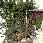 Photo de Quinta do Caracol