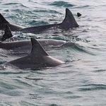 Foto de Kangaroo Island Ocean Safari