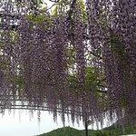 Foto van Ristorante New Garden