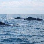 """Humpback whales: mom, calf, and """"escort."""""""