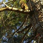 Avistamos esse esquilo, comendo amendoins, na ida para o café da manhã.