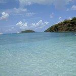 Maho Beach, baby starfish swimming too.
