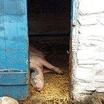 Photo de Muckross Traditional Farms
