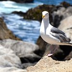 friendly gull