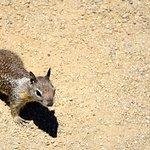friendlier squirrel