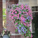 Beautiful hanging floral baskets at the entrance
