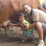 Ordenhando a vaca