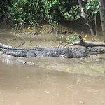 Whitsunday Crocodile Safari Foto
