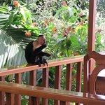Monkey taht came to the garden