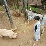 Delícia de hotel, natureza, animais, monitores para crianças e comida maravilhosa!!!