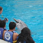 Mirando a los Delfines