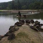 立石と州浜 毛越寺を象徴する風景