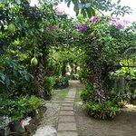 Espace jardin où sont les bungalows.