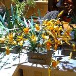 Pots d orchidées 1