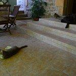 Gedeckte Veranda im Eingangsbereich mit der Katze und dem Hund.