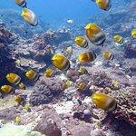 Photo of Bali Diving Academy Lembongan