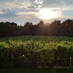 Sun over the vineyards after the storm. View from the deck.