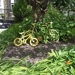 Yellow bikes. Why?